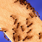 ant removal service