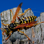 wasp removal service